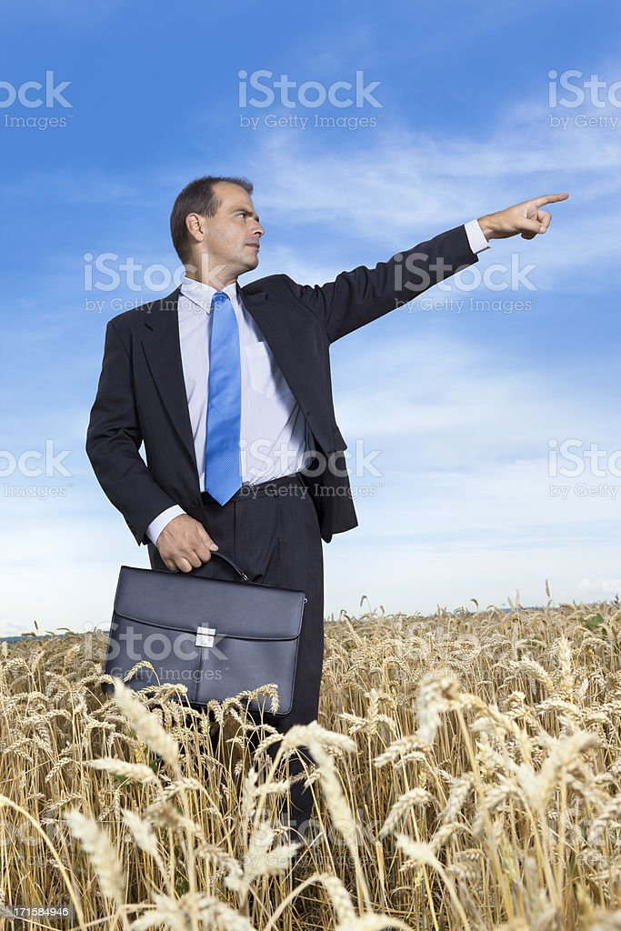Businessman in wheat field pointing with finger royalty-free stock photo