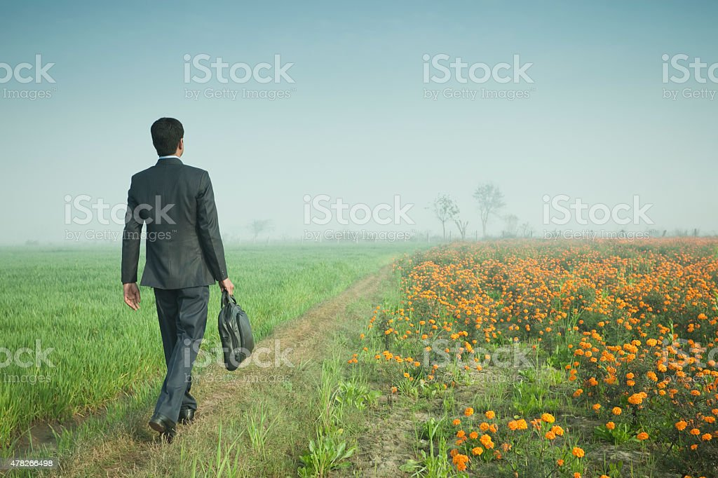 Businessman walking towards horizon through farmland holding laptop bag. stock photo