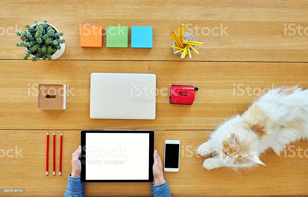 Businesswoman holding digital tablet by cat on table stock photo