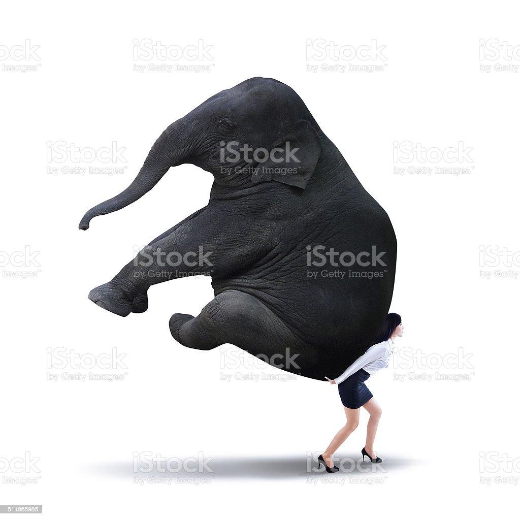 Businesswoman lifting heavy elephant isolated on white stock photo