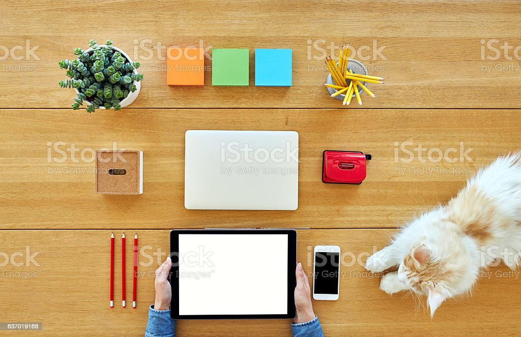 Businesswoman using digital tablet by cat on table stock photo