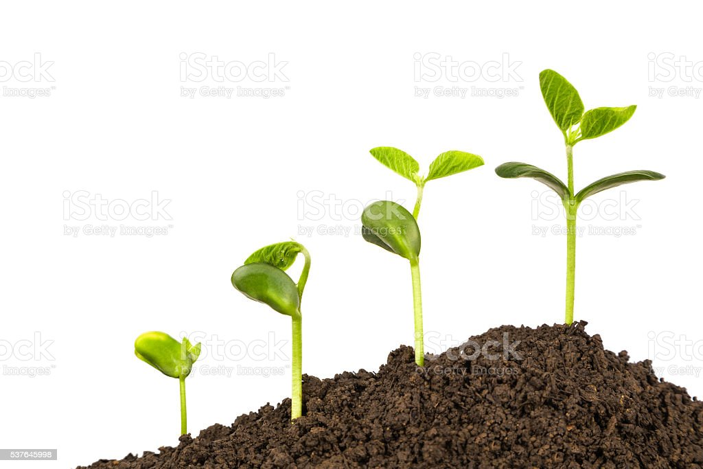 bussiness growth:new life growing in spring stock photo