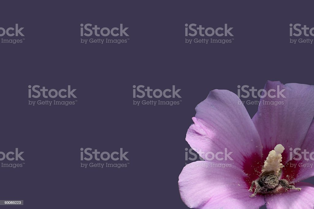 Busy as a bee royalty-free stock photo