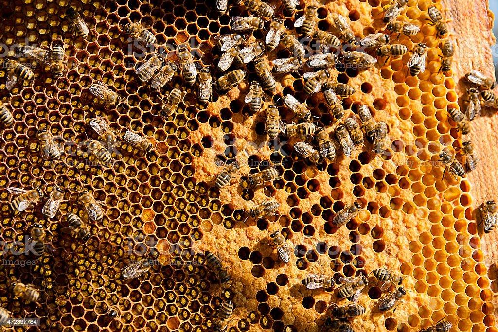 Ocupado bees, primer plano vista del trabajo bees on panal. foto de stock libre de derechos