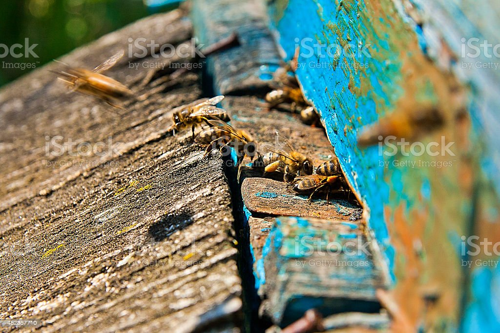 Agitado bees, primer plano vista de las abejas de trabajo. foto de stock libre de derechos