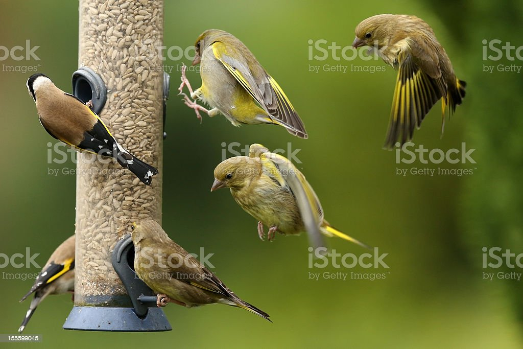 Busy Bird Feeder stock photo