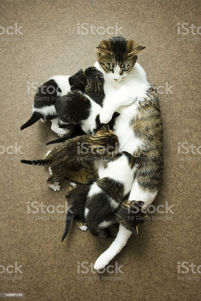 Busy cat royalty-free stock photo
