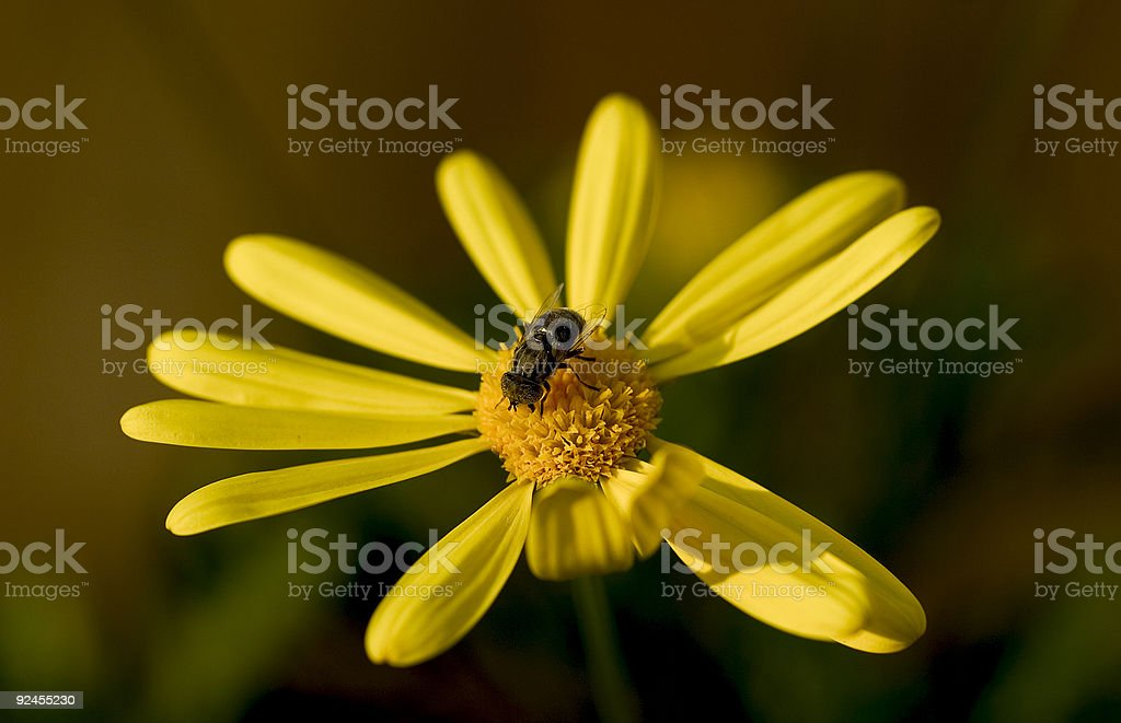 Busy day at work royalty-free stock photo