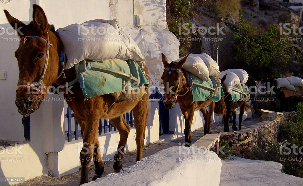 Busy Donkeys stock photo
