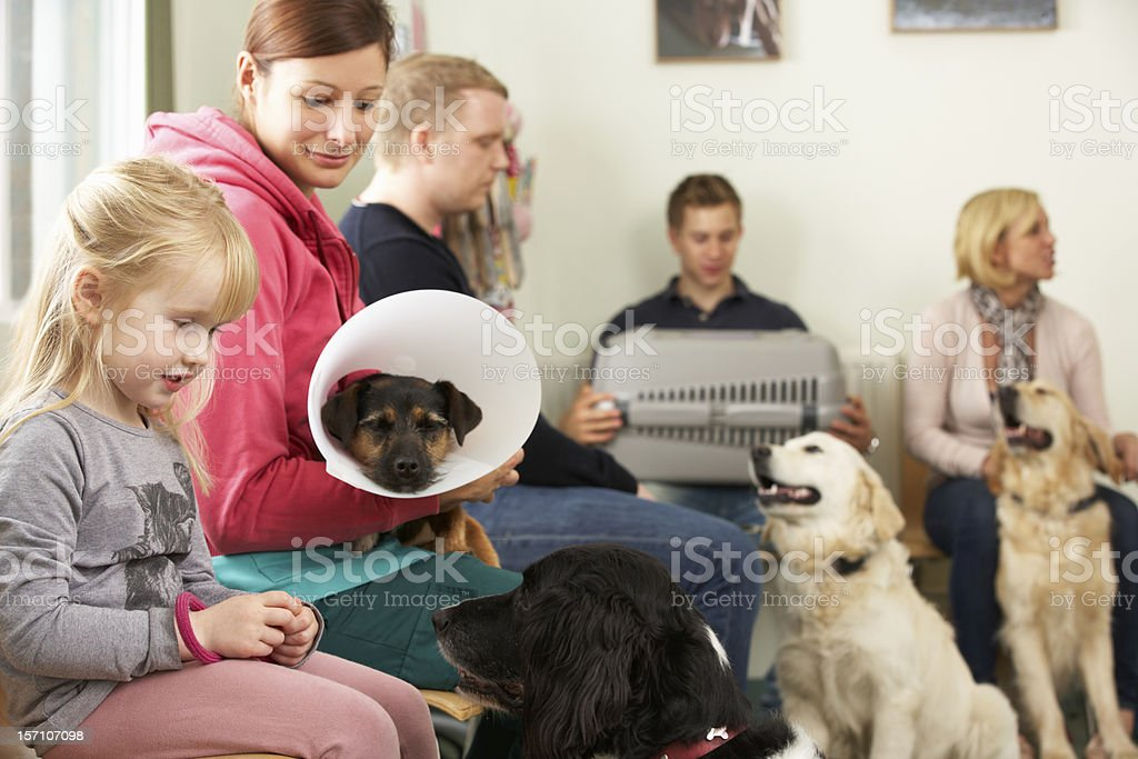 Busy Waiting Room In Veterinary Surgery royalty-free stock photo