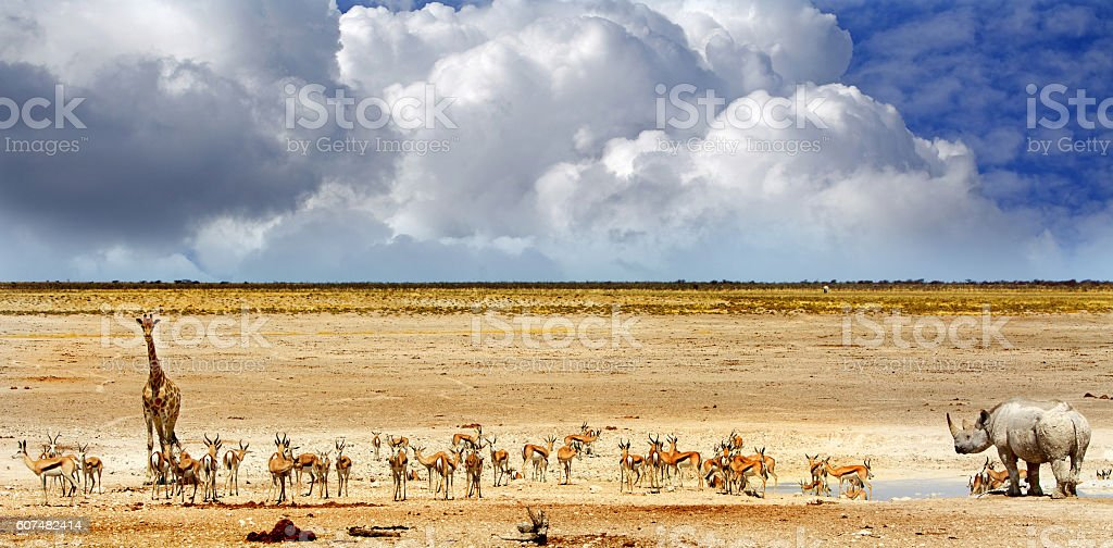 busy Waterhole with a stormy sky stock photo