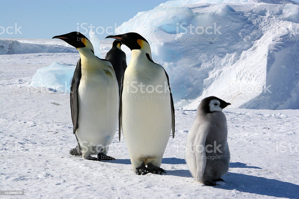 but... where is the south pole ? stock photo
