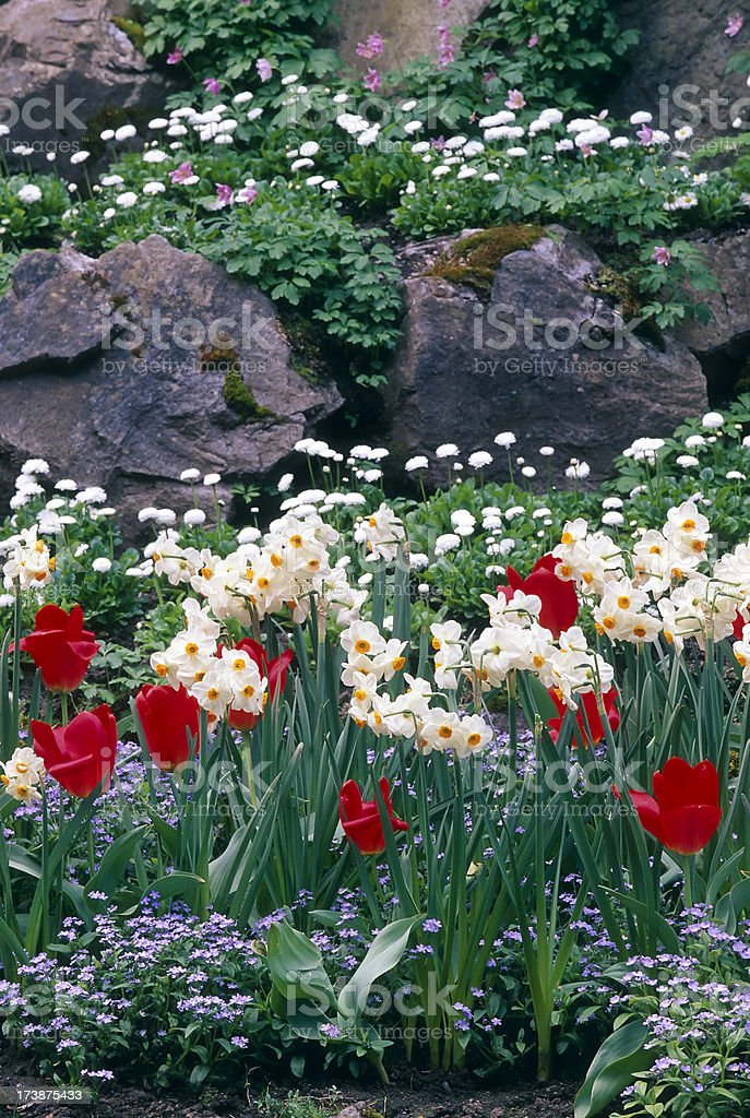 Butchart Garden Tulip Flower Landscaping Victoria royalty-free stock photo