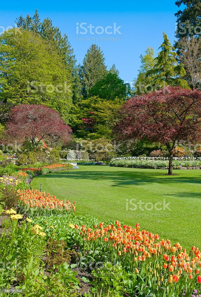 Butchart Garden - Tulip Season royalty-free stock photo