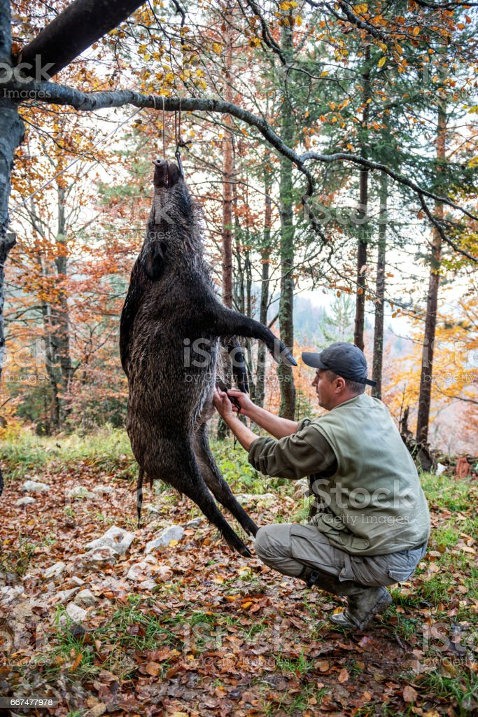 Butcher and wild boar stock photo