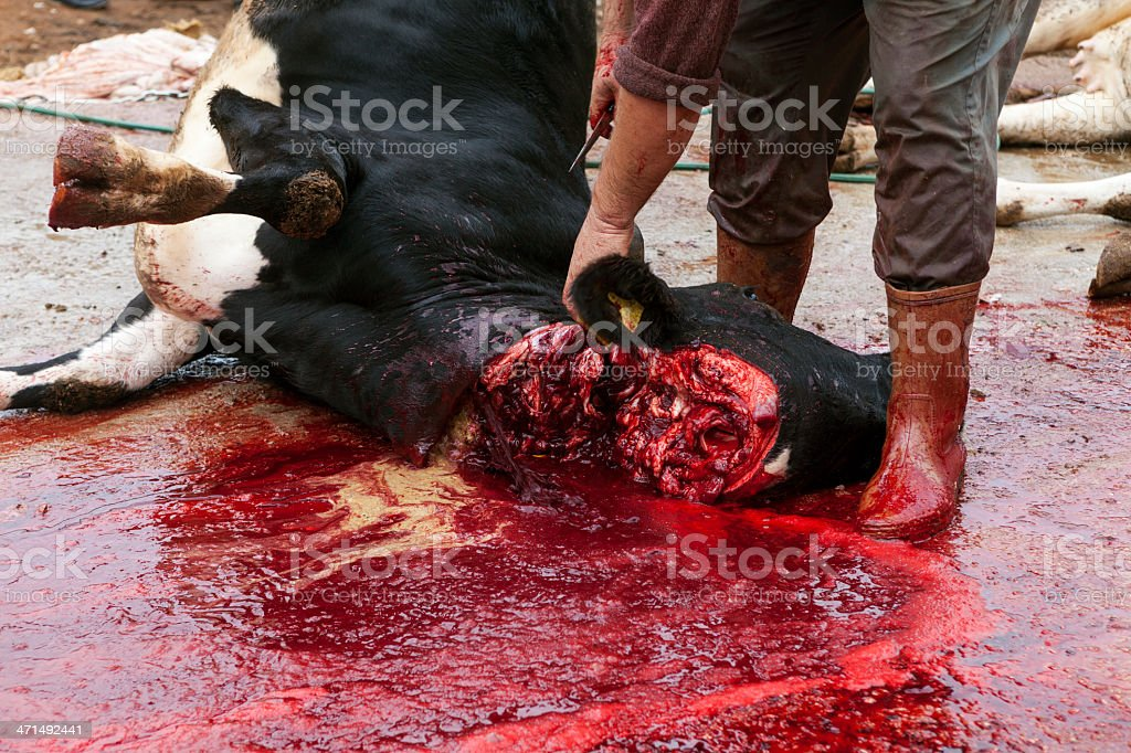 Butcher is cutting Cattle stock photo