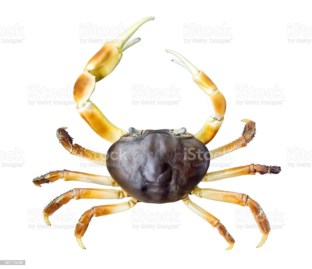 Butcher Land Crab stock photo