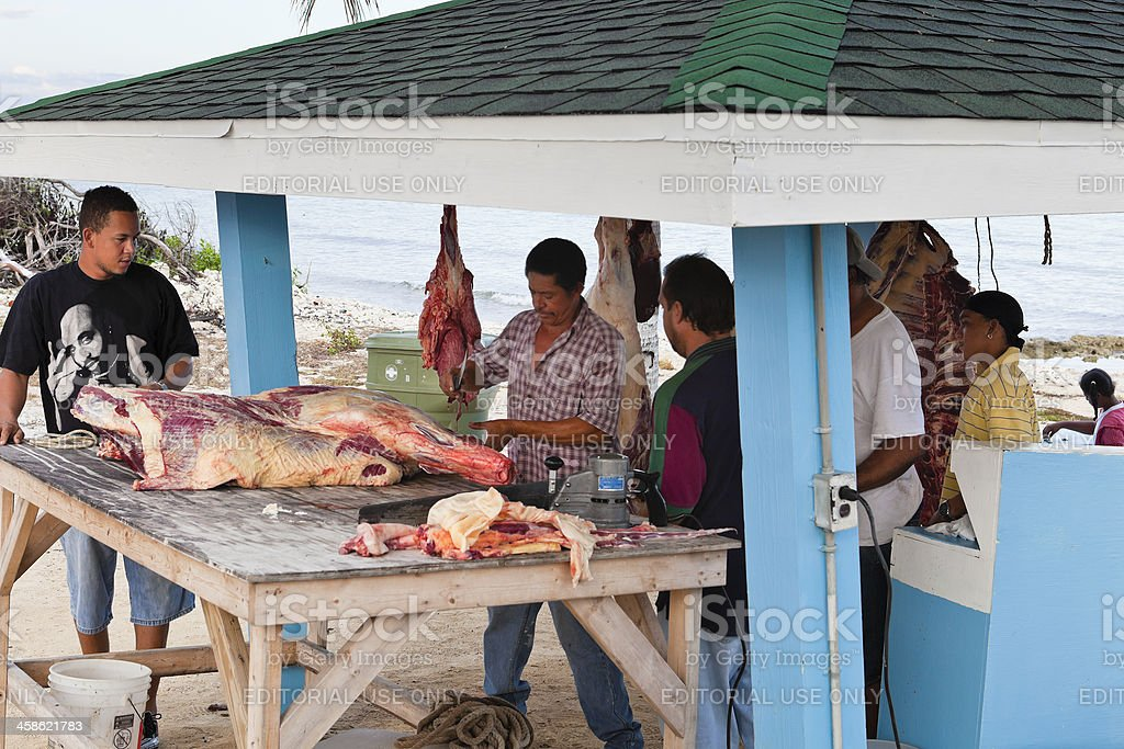 Butcher on the beach, Cayman Brac royalty-free stock photo