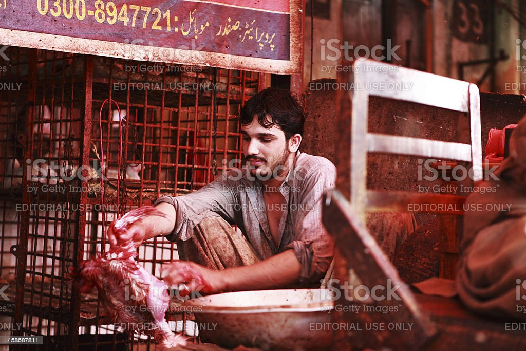 Butcher Skinning Slaughtered (Halal or Zabiha) Chicken royalty-free stock photo