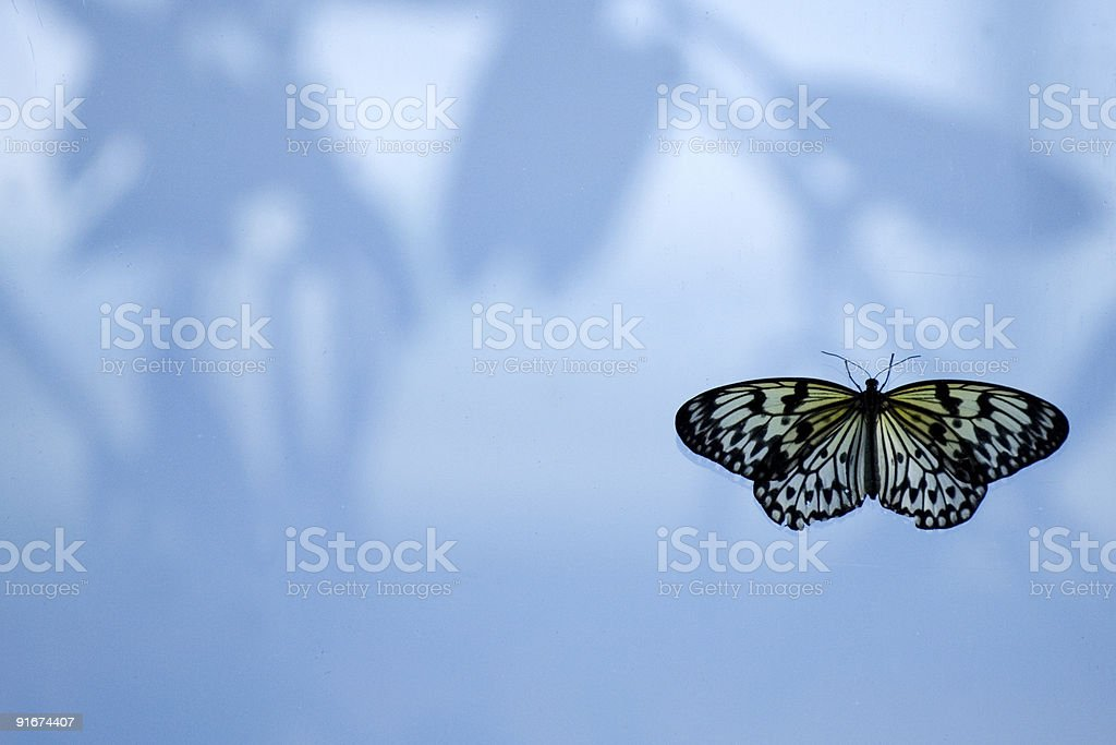 Buttefly on the window royalty-free stock photo