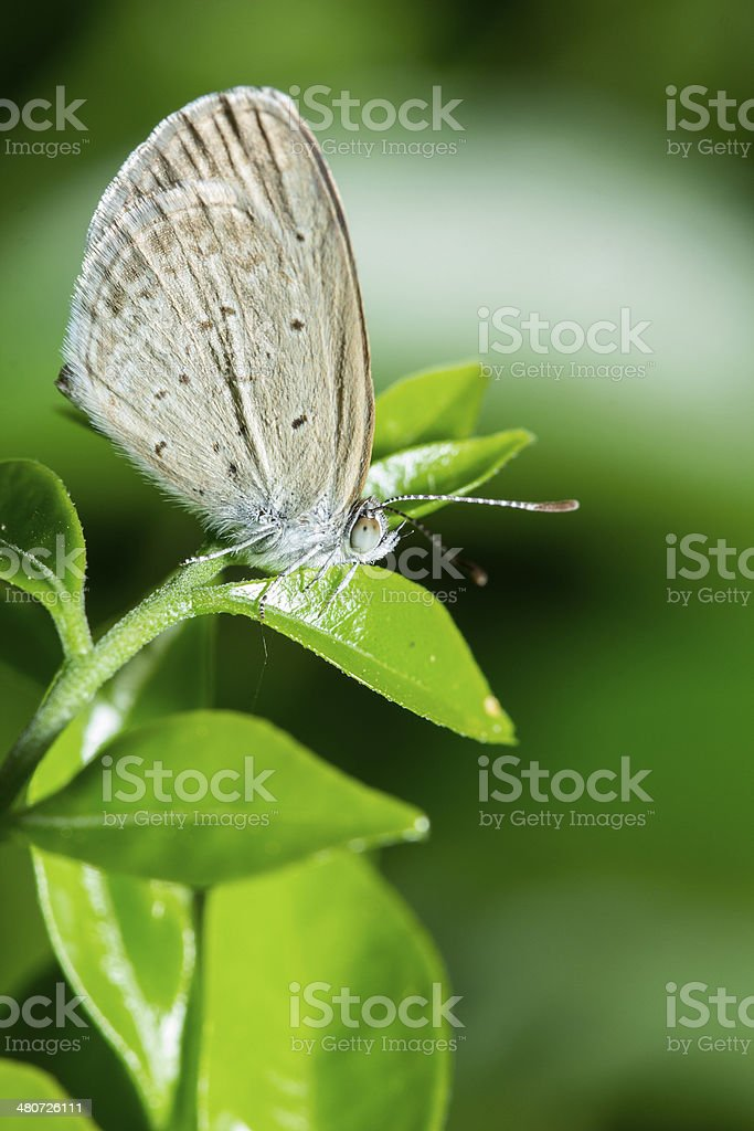 Butter fly stock photo