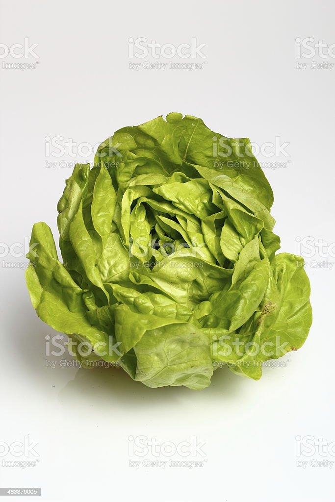 Butter Lettuce stock photo