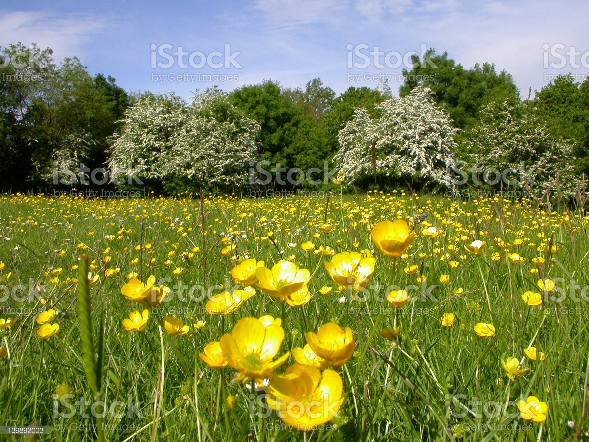 Buttercup meadow royalty-free stock photo