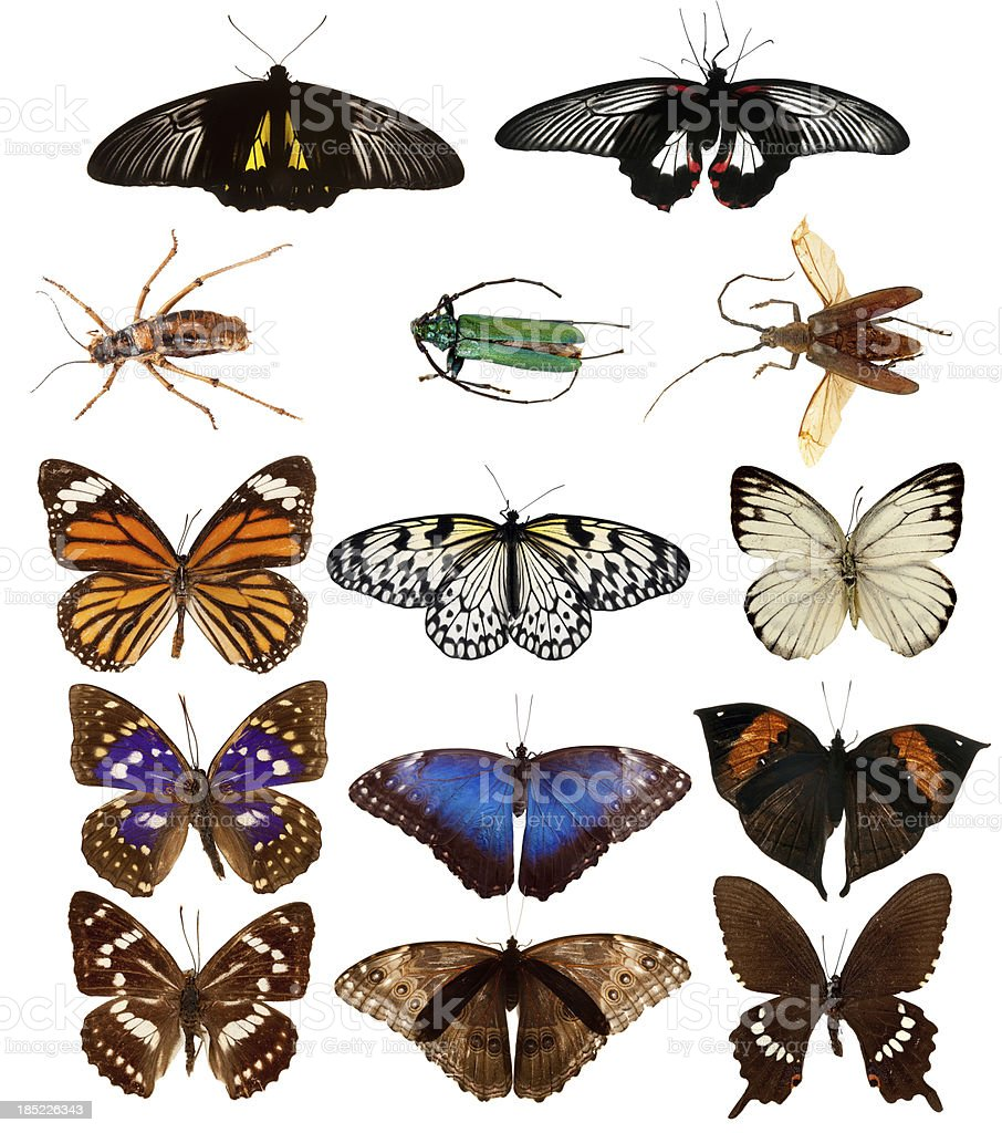Butterflies and beetles. stock photo