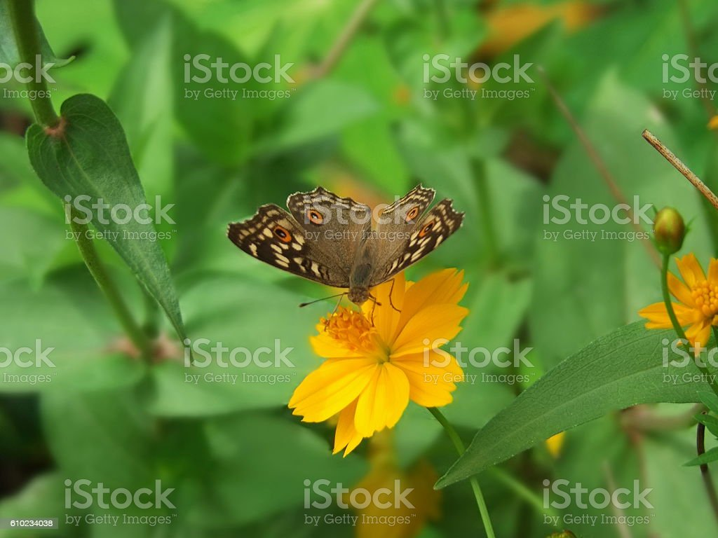 Butterflies and Flowers stock photo