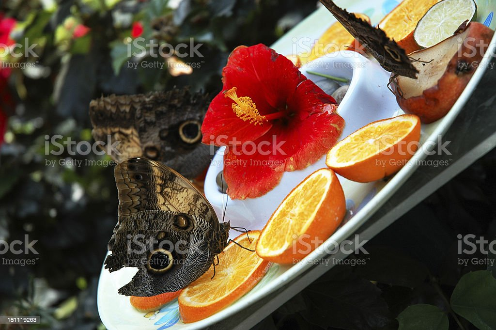 Butterflies and Fruit royalty-free stock photo