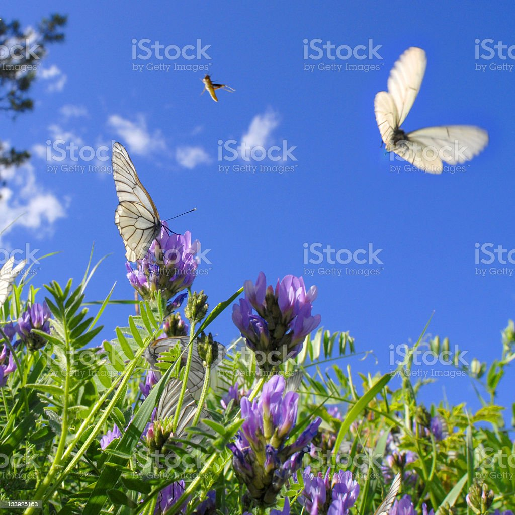 Butterflies and grasshoppers stock photo