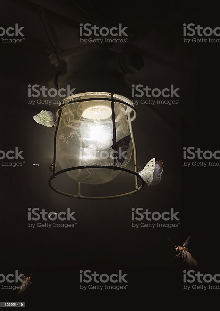 Butterflies and old lamp stock photo