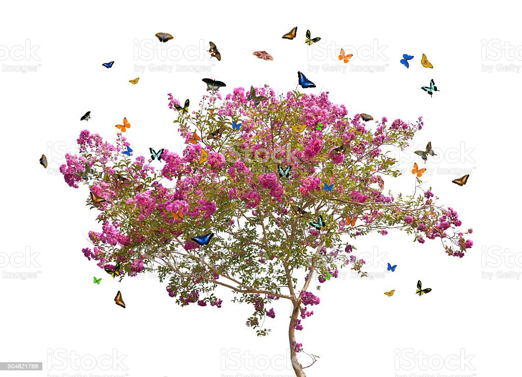 butterflies and pink spring blooming tree stock photo