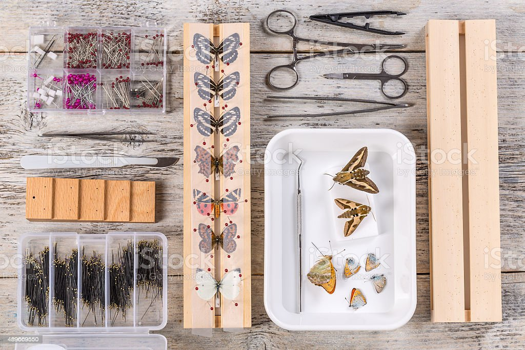 Butterflies and tools stock photo