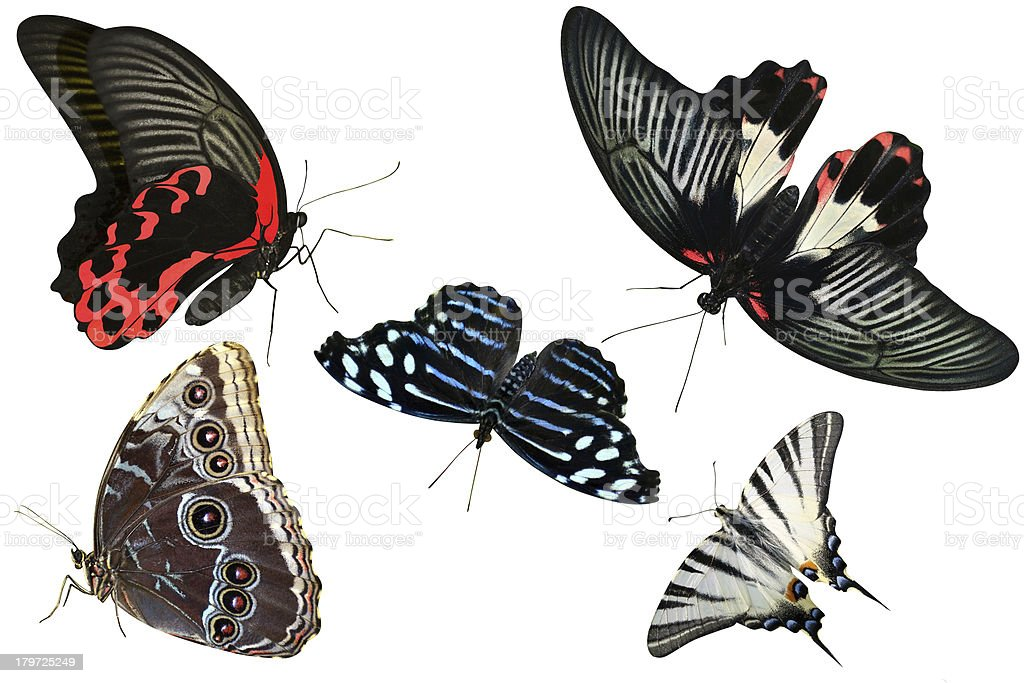 Butterflies are insects collection stock photo