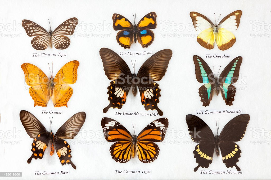 Butterflies collection stock photo