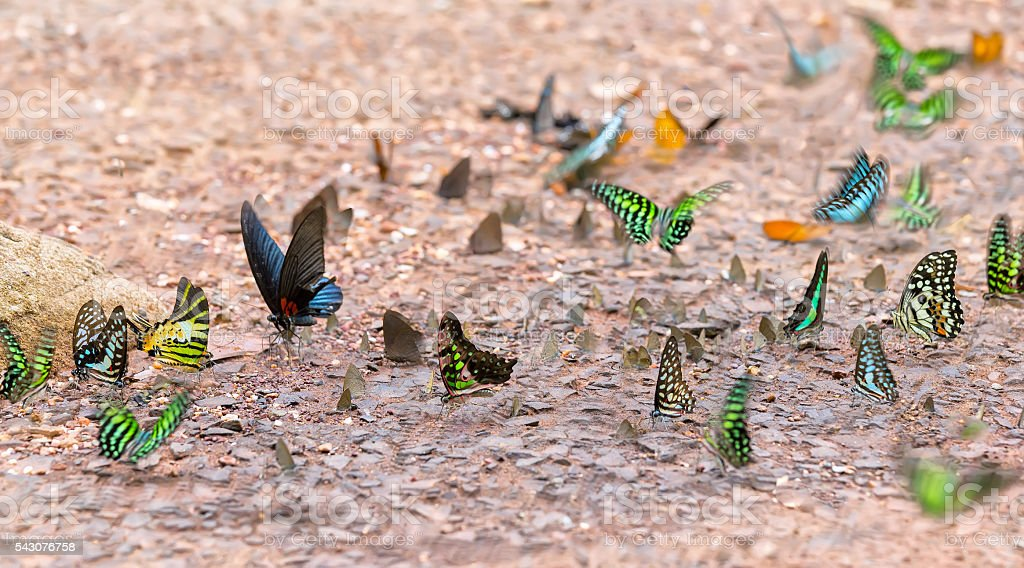 Butterflies hovering above the ground stock photo