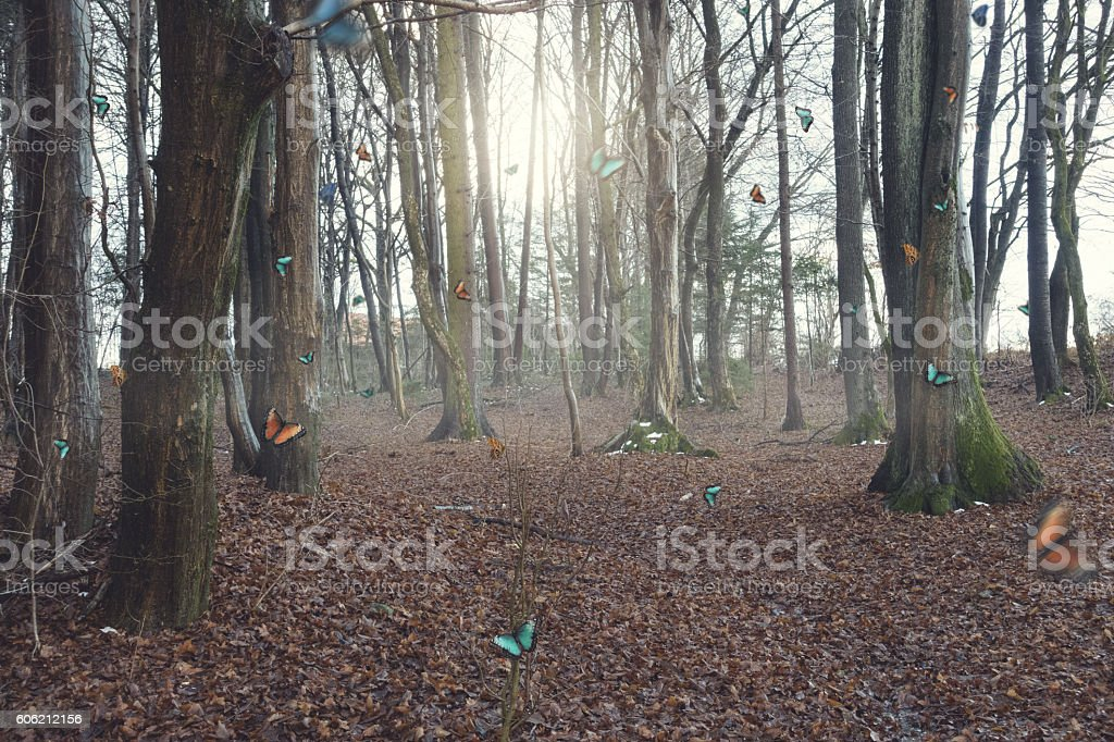 Butterflies in early morning forest stock photo