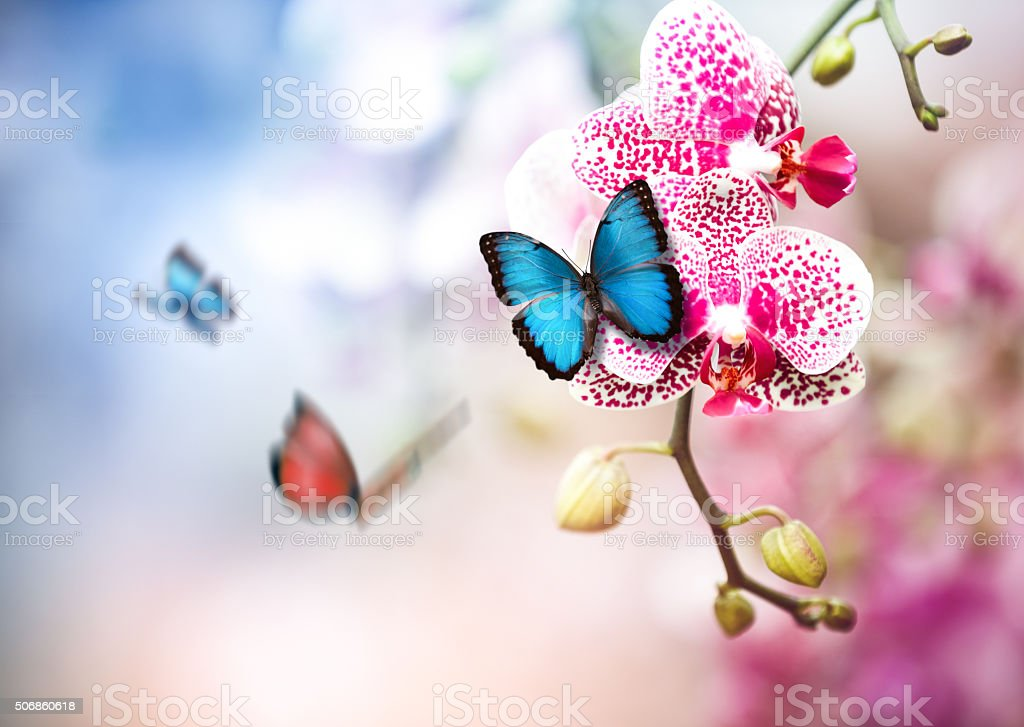 Butterflies In Orchid Garden stock photo