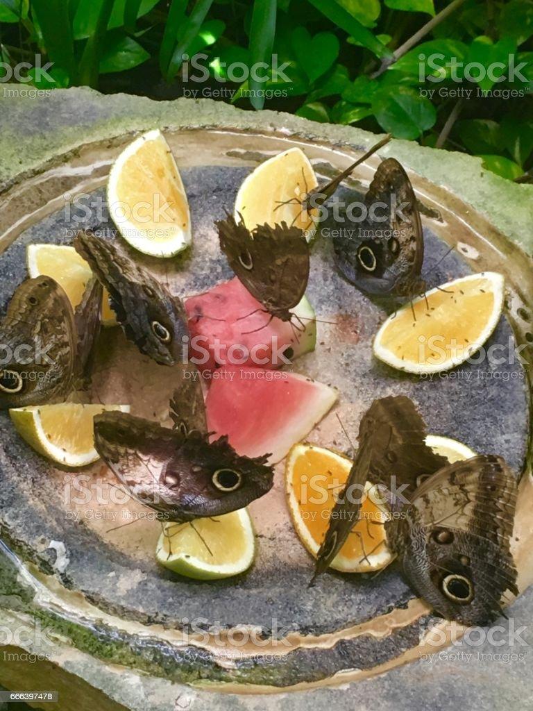 Butterflies in Xcaret stock photo