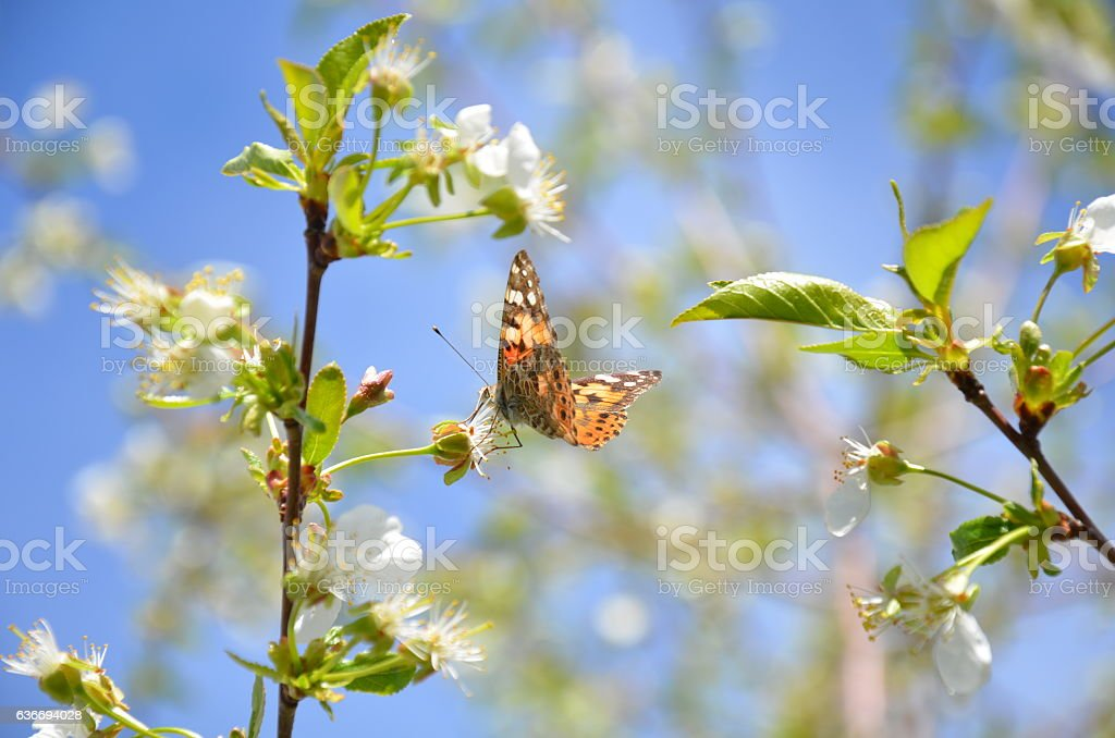Butterflies of Spring stock photo