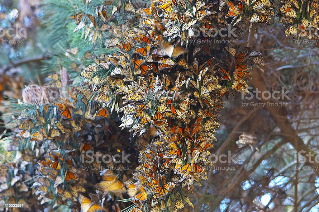 Butterflies on a Tree royalty-free stock photo