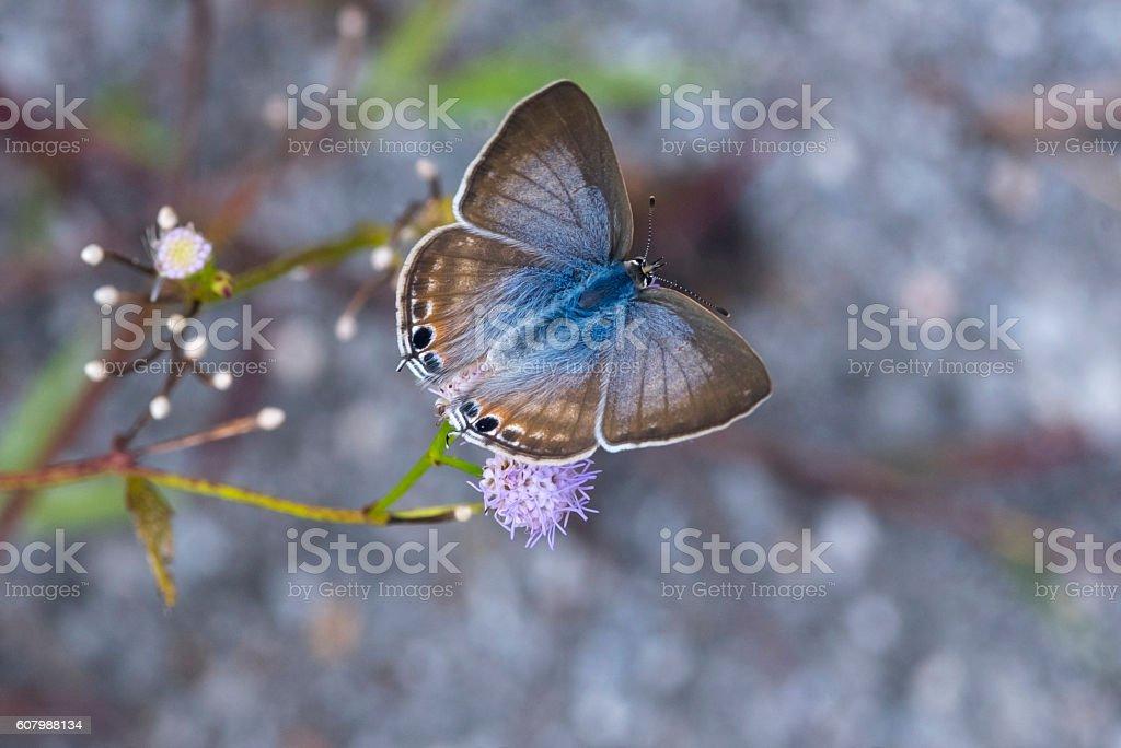 Papillons sur fleurs photo libre de droits