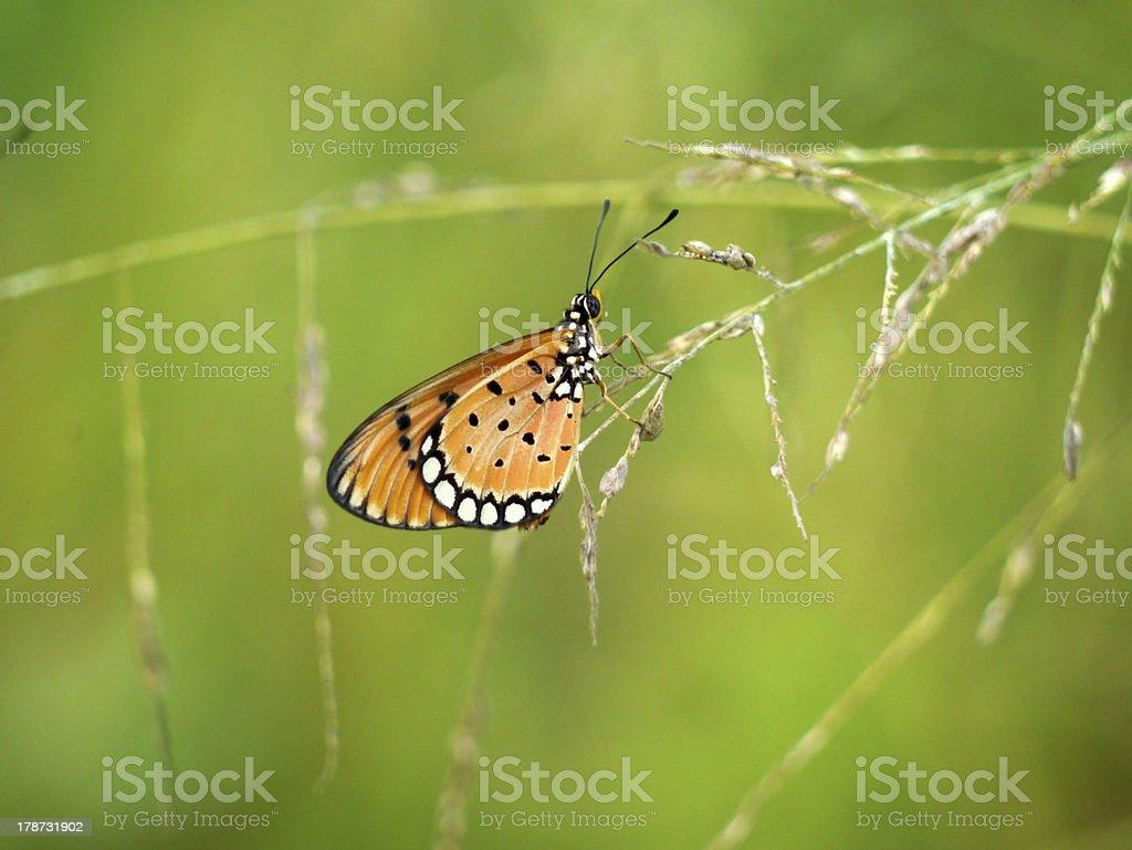 butterflies on grass. stock photo