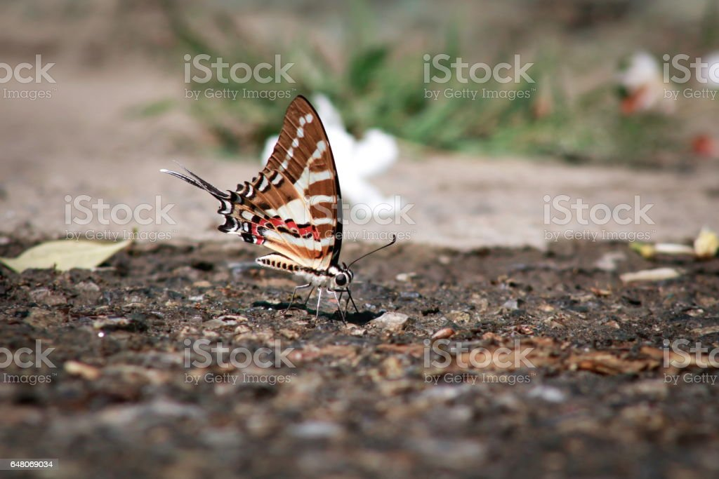 Butterflies on the road. stock photo