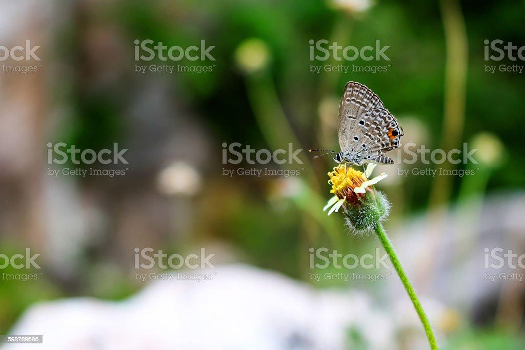 Butterflies perch on flowering grass. stock photo