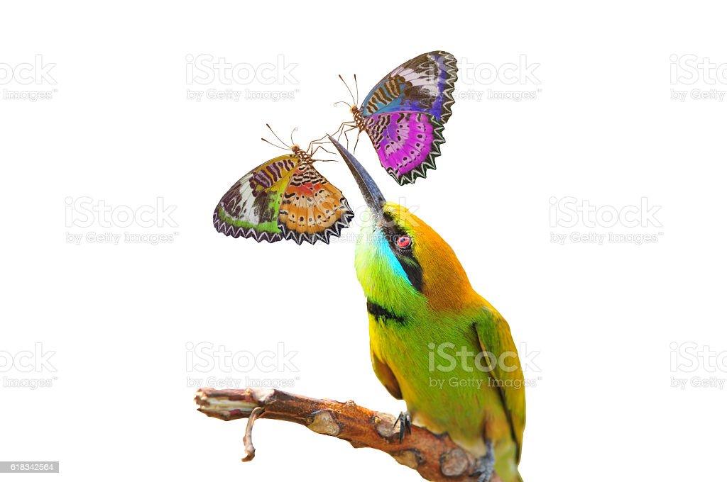 Butterflies perch on Green Bee - eater bird stock photo