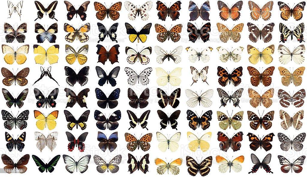 80 butterflies stock photo