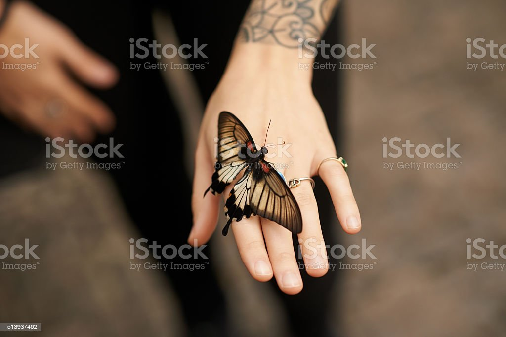 Butterflies remind us that change is a beautiful thing stock photo