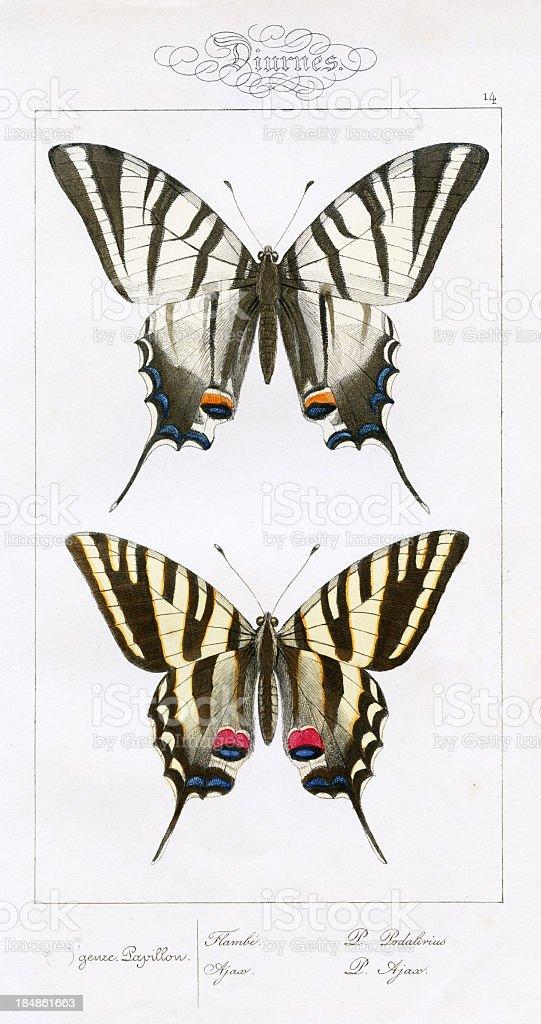 butterflies, scientific illustration, print 1834 stock photo